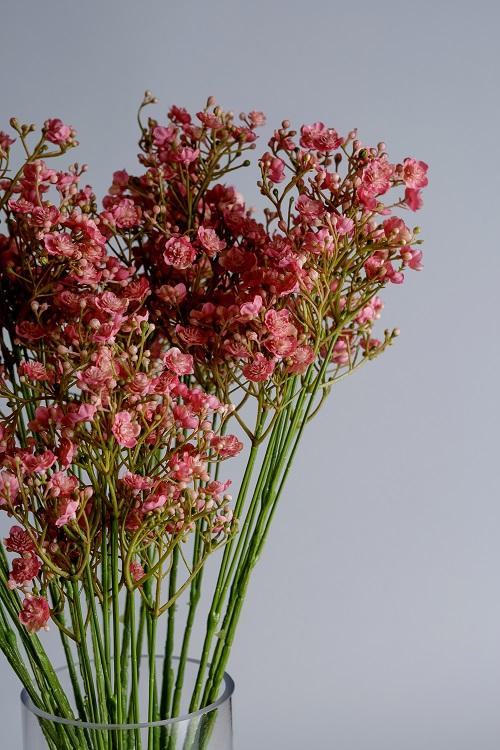 pink gyposphila