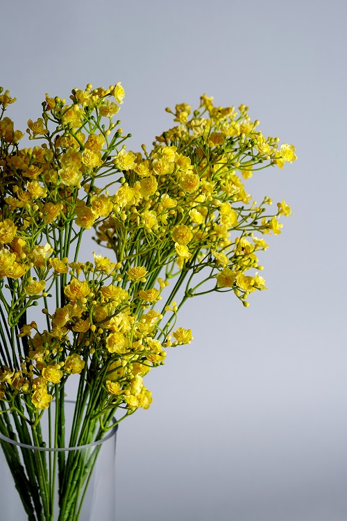 Artificial Transitional Flowers (Gypsophila)